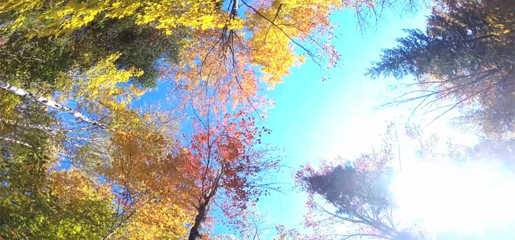 Go Wood Sunglasses and wood iphone cases autumn video
